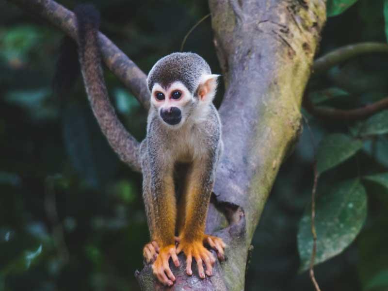 region amazonica amazonas amazonia
