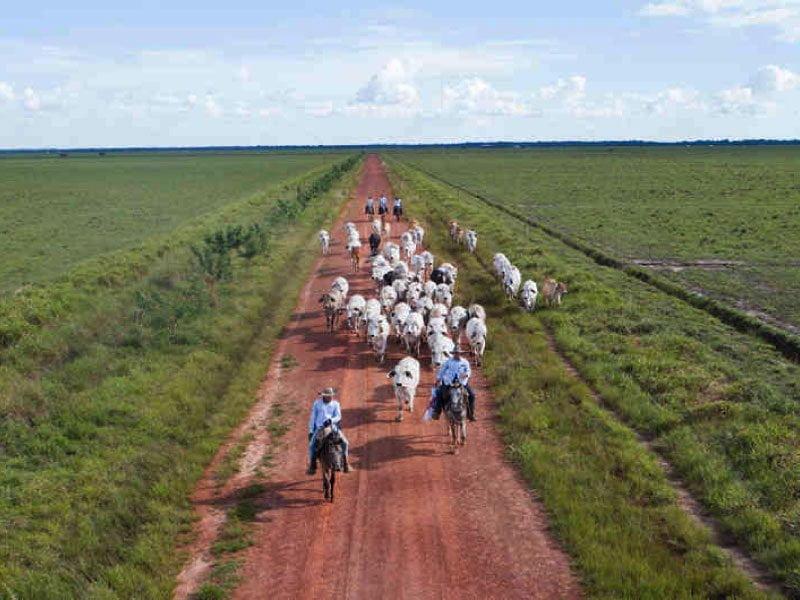 economia región orinoquía ganadería